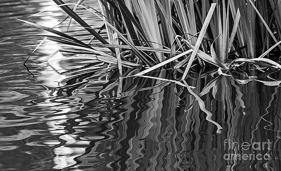 Kate Brown - Reflections in Black and White