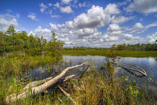 Debra and Dave Vanderlaan - Reflections in the Glades
