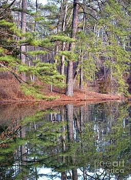 Maria Urso  - Reflections in the Pines