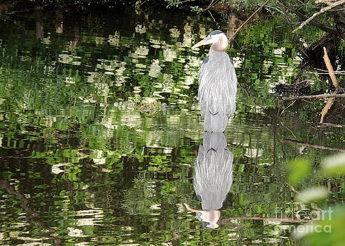 Reflections in the Pond by Pamela Rivera