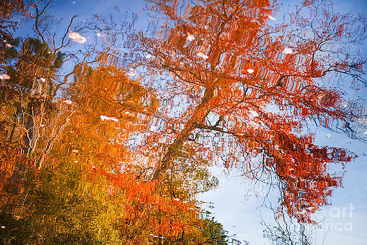 Lisa McStamp - Reflections of Autumn