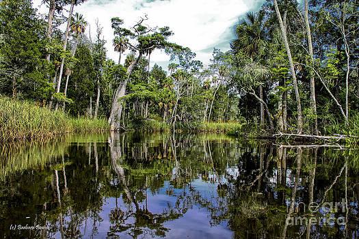 Barbara Bowen - Reflections off Otter Creek