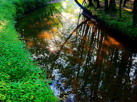Reflections on the Water by Tanya Renee Herb
