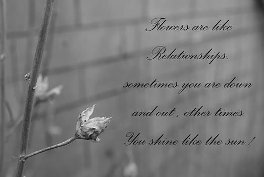 Relationships by Fabian Cardon
