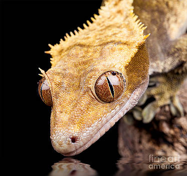 Simon Bratt Photography LRPS - Reptile near water close up