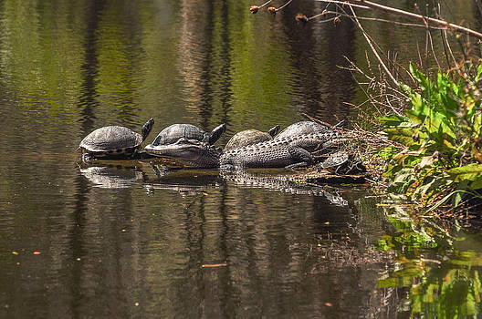 Reptile Row by Donnie Smith