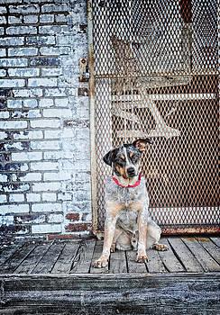 Rescue is my favorite breed by Kelley Nelson