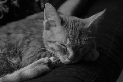 Rest Easy by Jennifer Kelly