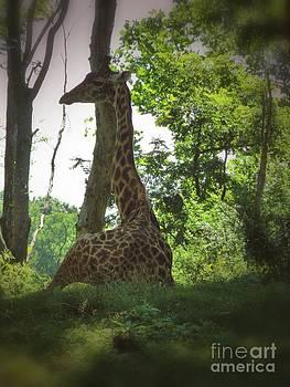 Resting Giraffe by K L Roberts
