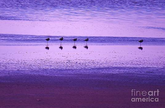 Avocets Resting in the Sunset by Michele Penner
