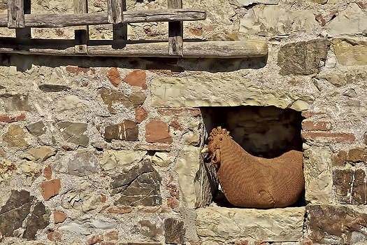David Letts - Resting Rooster on a Farm Wall