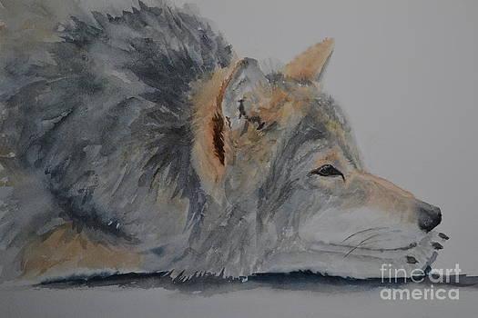 Resting Wolf by Betty Mulligan