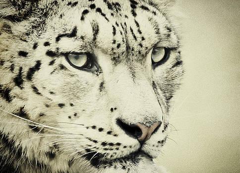 Retro Snow Leopard by Chris Boulton