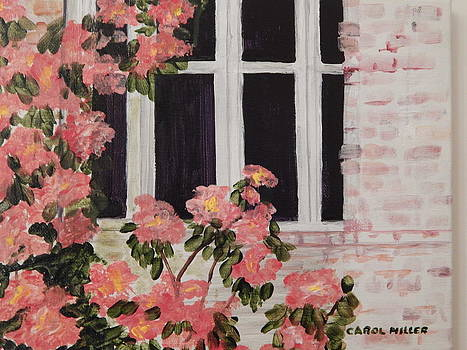 Rhapsody in Pink by Carol L Miller