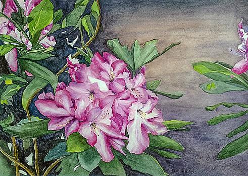 Rhodedendron by Martha Shilliday