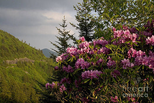 Jonathan Welch - Rhododendron 1