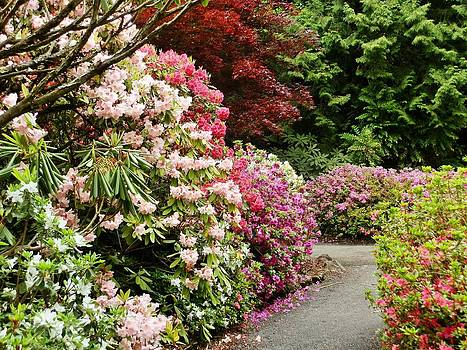 Rhododendron Garden by VLee Watson