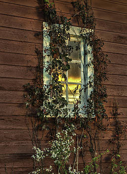 Thomas Schoeller - Ribbons of Vines and Inspiring Sunset Reflections