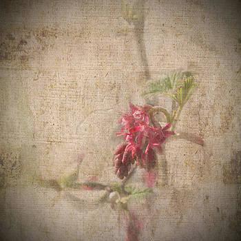 Liz  Alderdice - Ribes