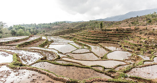 Rice Paddy of Vietnam by Paul Frederiksen