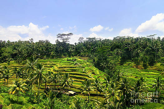 Rice Terrace in Bali by Lars Ruecker