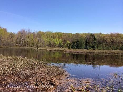 Richards Pond by Alicia Whiteford
