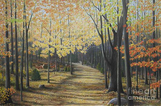 Rideau walking trail by Al Hunter