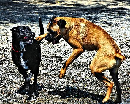 Right Hook by Don Mann
