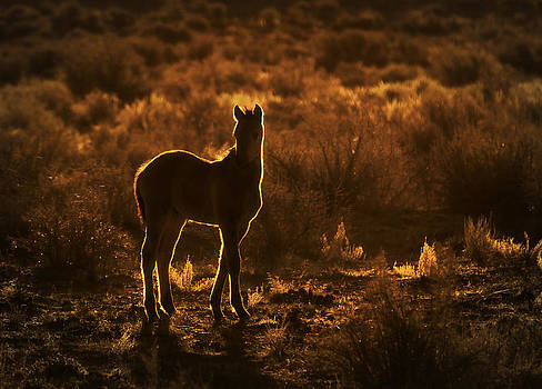 Rim Light Around The Foal by Robin  Wadhams