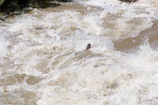 Steven Ralser - rio grande kayaking