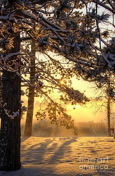 Marianne Kuzimski - Rise Through Pines