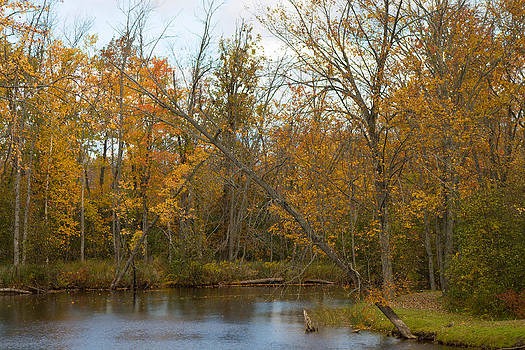 River in Autumn by Rhonda Humphreys