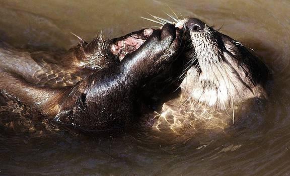 Paulette Thomas - River Otter Praying