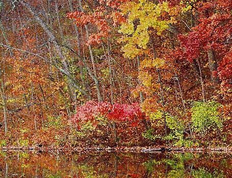 Riverbank Beauty by James Hammen