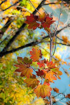 Gwyn Newcombe - Riverfront Autumn