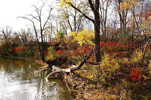 Riverfront in Fall by Jocelyne Choquette