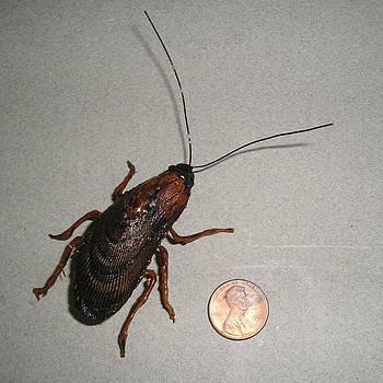 Roach Fridge Magnet by Roger Swezey