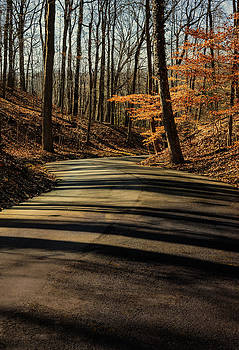 Road into the Woods by Diana Boyd