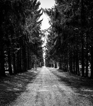 Road often Taken by Theodore Lewis