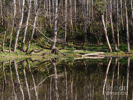 Siuslaw Forest  by Tracy Knauer