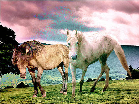 Roaming Stallions by Patricia Keller
