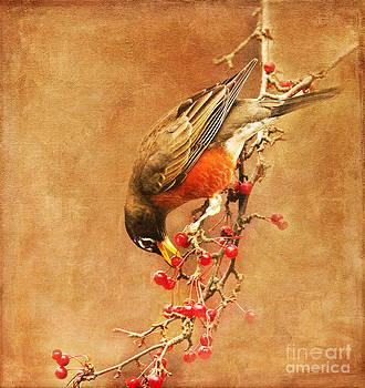Robin Eating Berries by Olivia Hardwicke