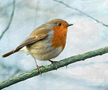 Robin by Lisa Cockrell