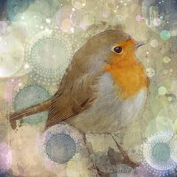 Robin redbreast by Barbara Orenya