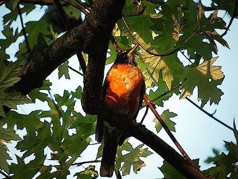 Robin Waiting by Linda Francis