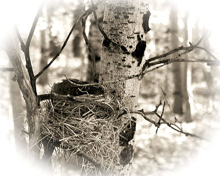 William Havle - Robins Nest in the Aspens