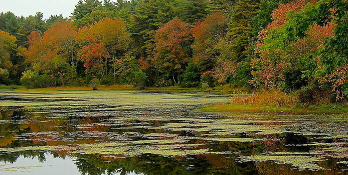 Amazing Jules - Rock Pond