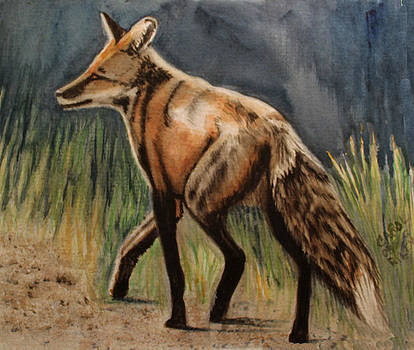 Rockies Fox by Carol Oberg Riley