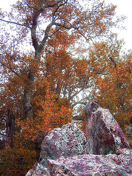 Donna Blackhall - Rockin Autumn