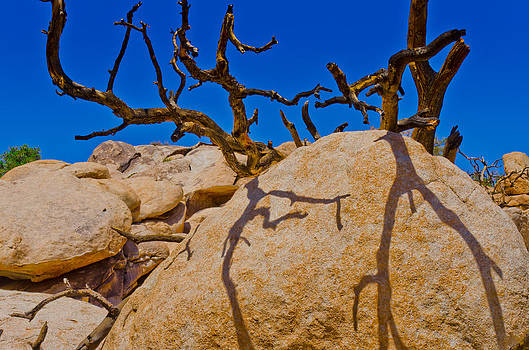 Rocks and Branches by Philip Chiu